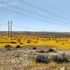 Wildflowers blanket the desert near the UC Davis study site in the Mojave Desert. (Karen Tanner)